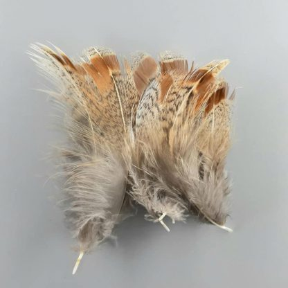 Partridge Feathers Rebhuhn Rupf